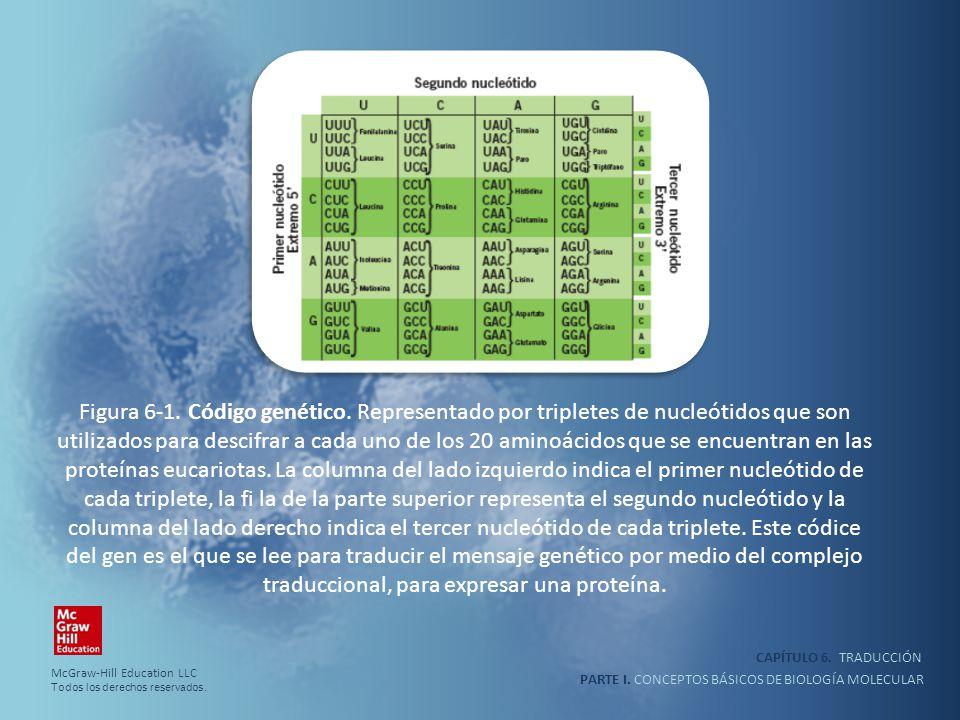 traduccional, para expresar una proteína.