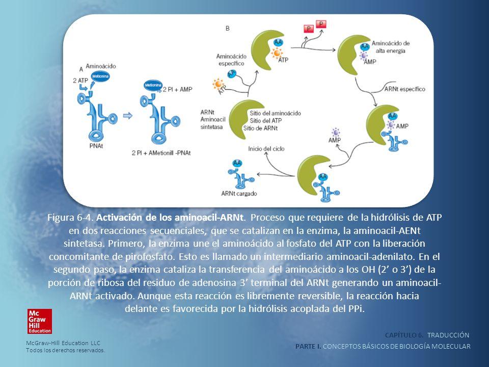 Figura 6-4. Activación de los aminoacil-ARNt