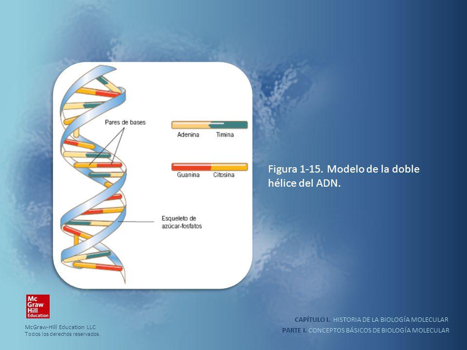 Figura 1-15. Modelo de la doble hélice del ADN.