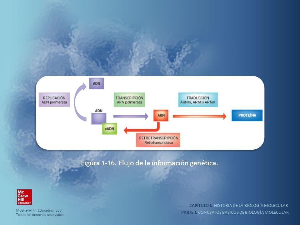 Figura 1-16. Flujo de la información genética.