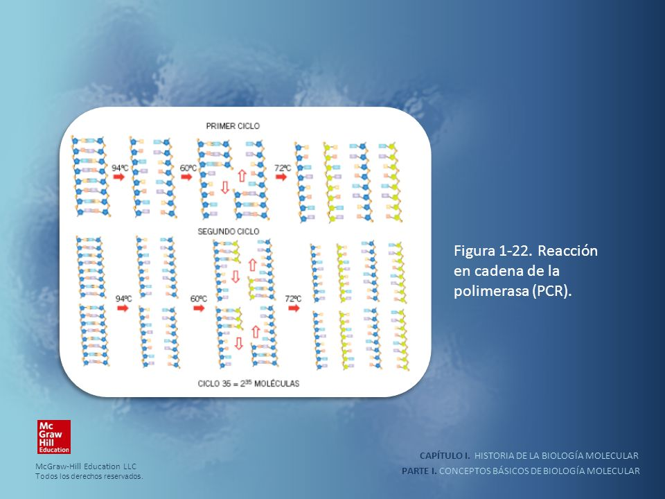 Figura 1-22. Reacción en cadena de la polimerasa (PCR).