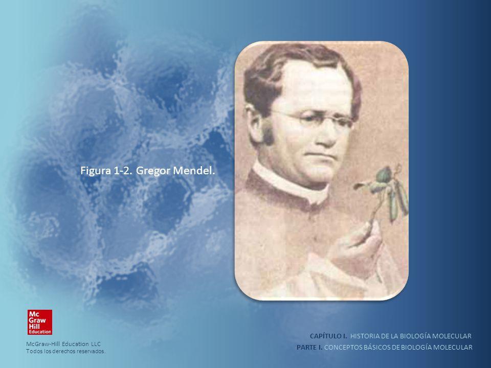 Figura 1-2. Gregor Mendel. CAPÍTULO I. HISTORIA DE LA BIOLOGÍA MOLECULAR. McGraw-Hill Education LLC.