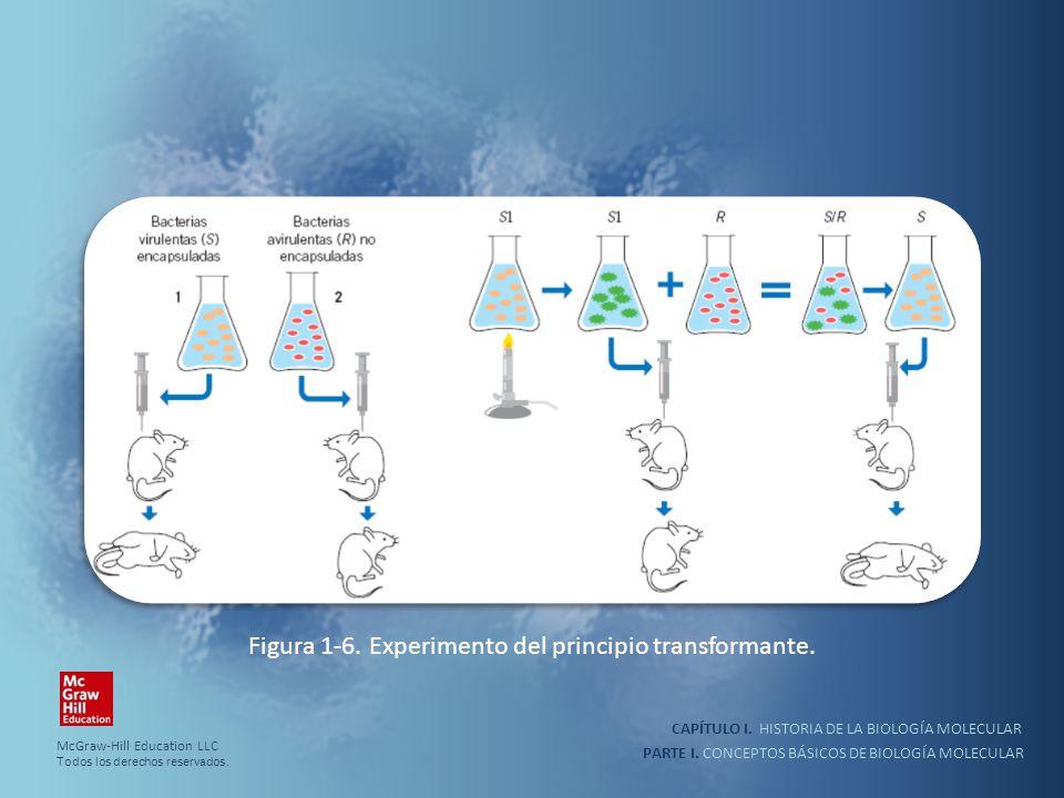 Figura 1-6. Experimento del principio transformante.