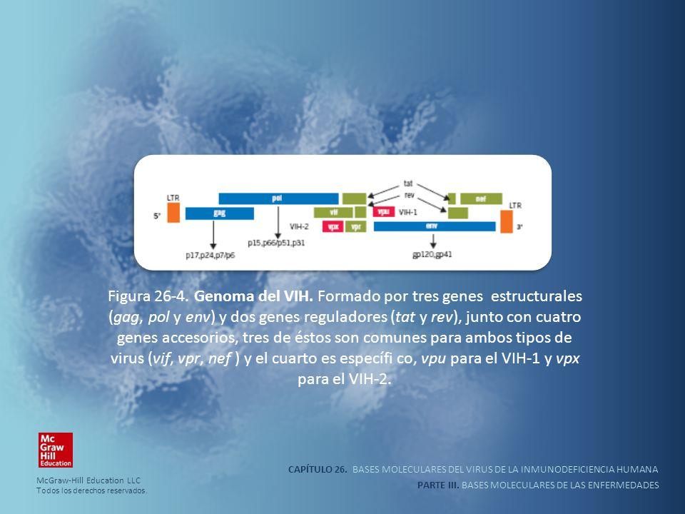 Figura 26-4. Genoma del VIH. Formado por tres genes estructurales (gag, pol y env) y dos genes reguladores (tat y rev), junto con cuatro genes accesorios, tres de éstos son comunes para ambos tipos de virus (vif, vpr, nef ) y el cuarto es específi co, vpu para el VIH-1 y vpx para el VIH-2.