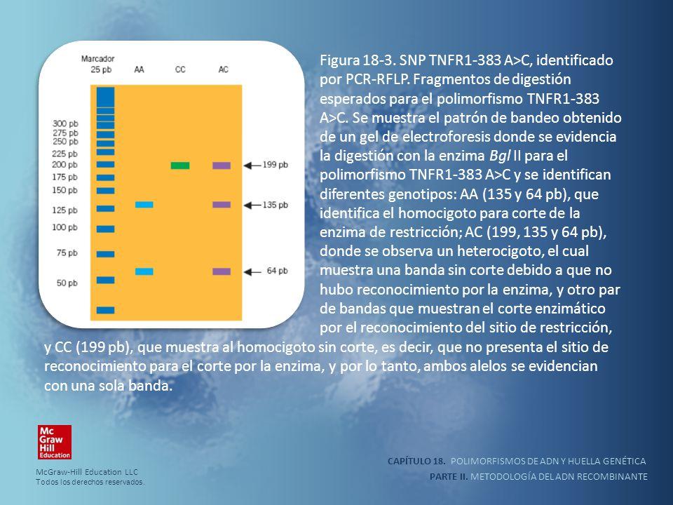 Figura 18-3. SNP TNFR1-383 A>C, identificado por PCR-RFLP
