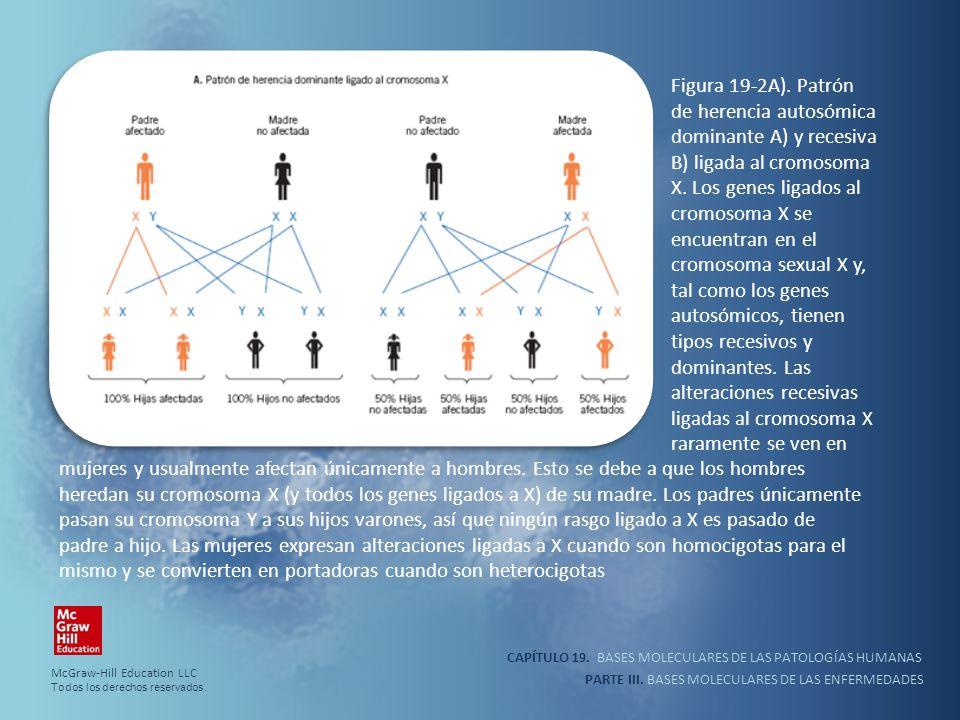 Figura 19-2A). Patrón de herencia autosómica dominante A) y recesiva B) ligada al cromosoma X. Los genes ligados al cromosoma X se encuentran en el cromosoma sexual X y, tal como los genes autosómicos, tienen tipos recesivos y dominantes. Las alteraciones recesivas ligadas al cromosoma X raramente se ven en