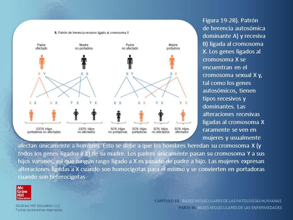 Figura 19-2B). Patrón de herencia autosómica dominante A) y recesiva B) ligada al cromosoma X. Los genes ligados al cromosoma X se encuentran en el cromosoma sexual X y, tal como los genes autosómicos, tienen tipos recesivos y dominantes. Las alteraciones recesivas ligadas al cromosoma X raramente se ven en mujeres y usualmente