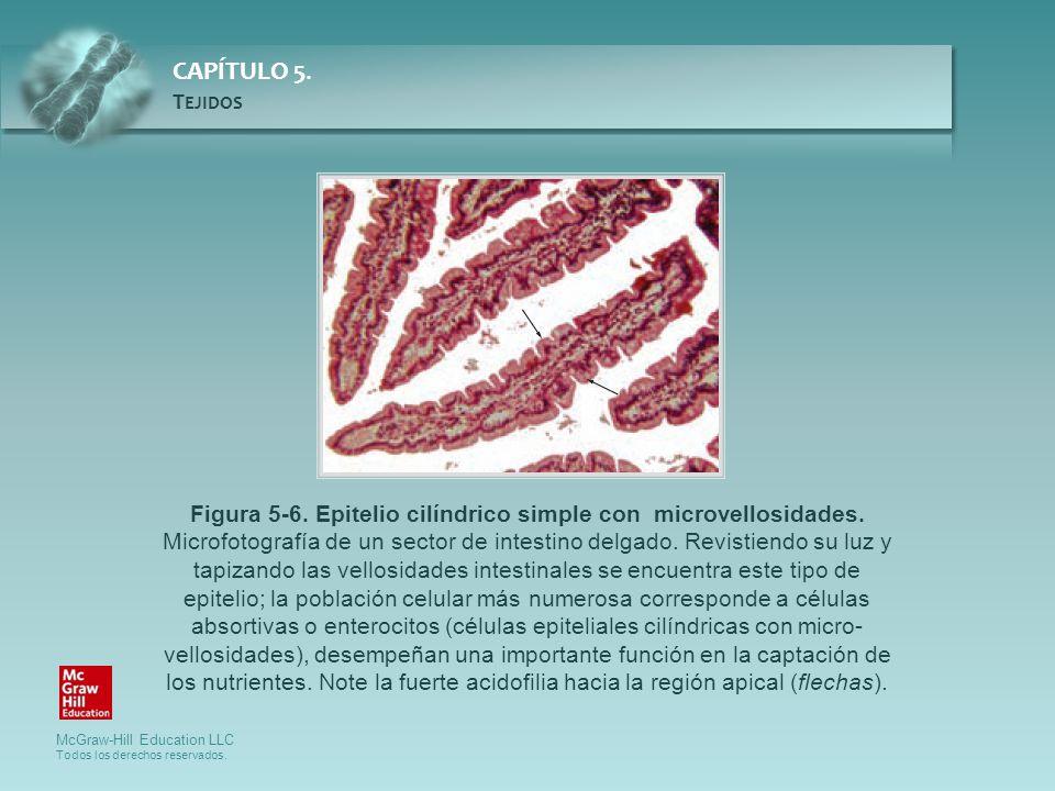 Figura 5-6. Epitelio cilíndrico simple con microvellosidades