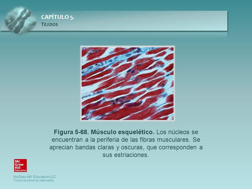 Figura 5-68. Músculo esquelético