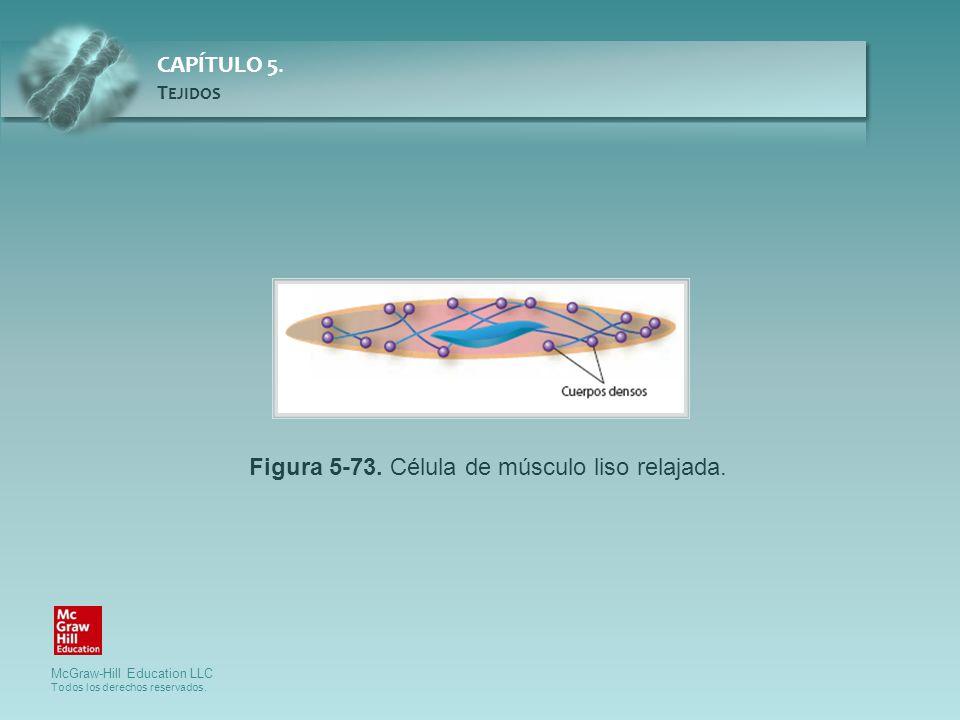 Figura 5-73. Célula de músculo liso relajada.