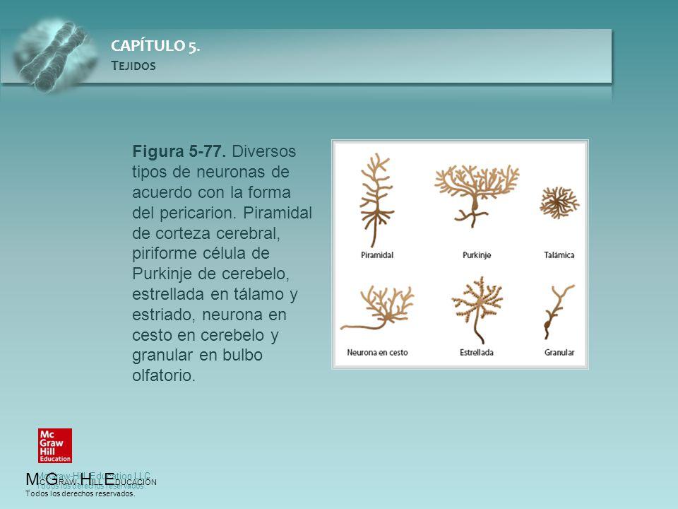 Figura 5-77. Diversos tipos de neuronas de acuerdo con la forma