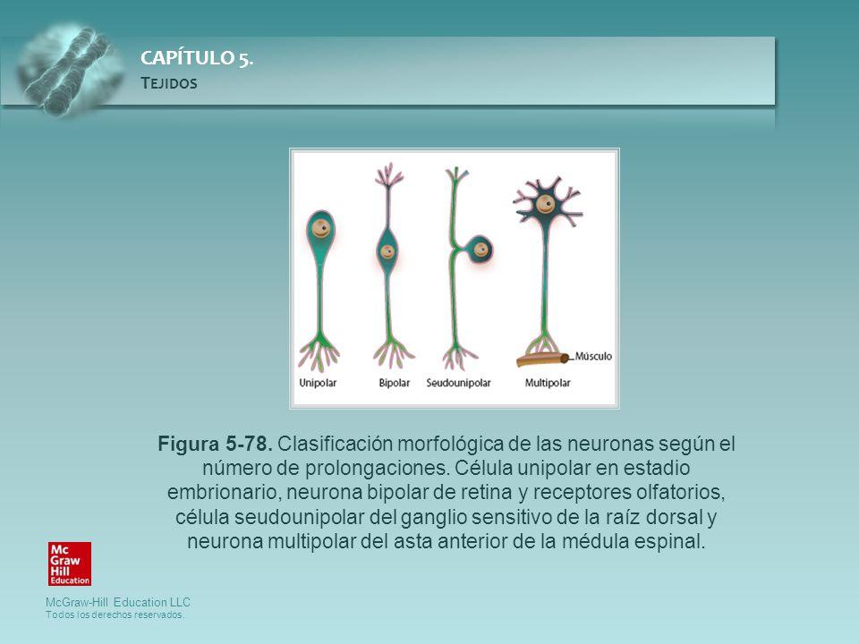 Figura 5-78. Clasificación morfológica de las neuronas según el número de prolongaciones.