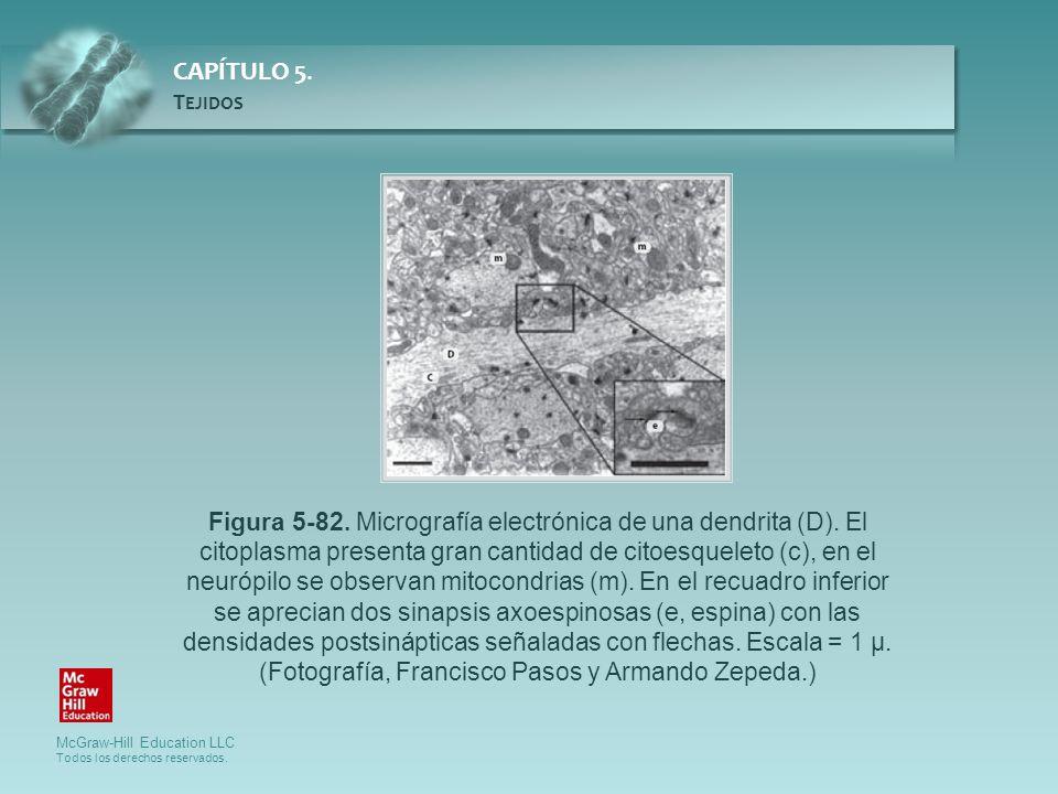 Figura 5-82. Micrografía electrónica de una dendrita (D)