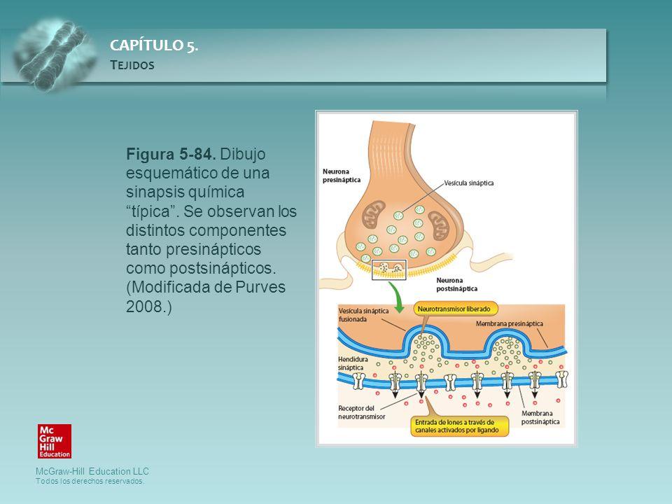Figura 5-84. Dibujo esquemático de una sinapsis química típica