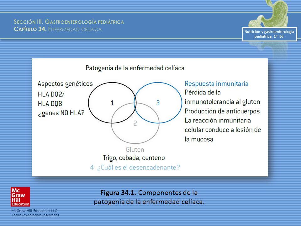 Figura 34.1. Componentes de la patogenia de la enfermedad celíaca.