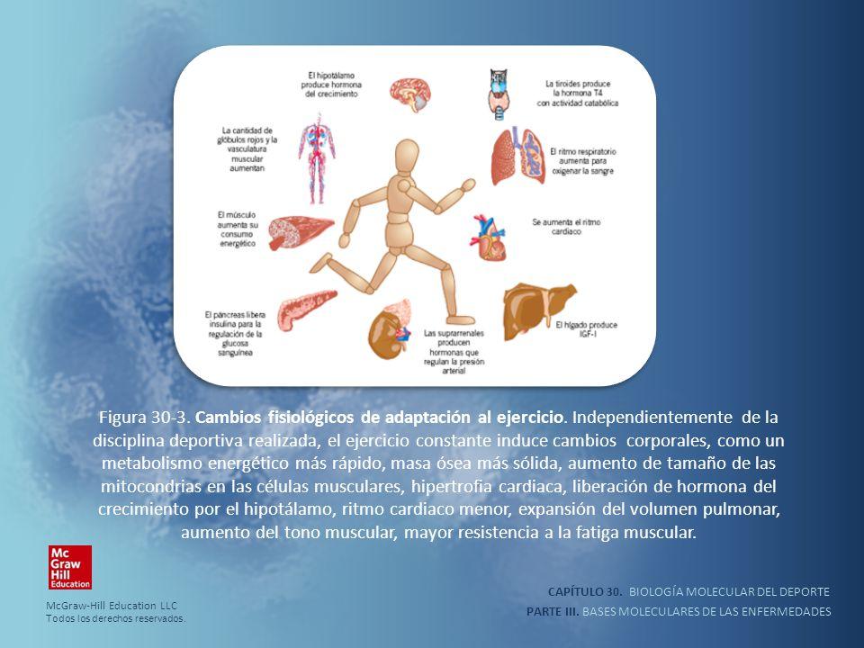 Figura 30-3. Cambios fisiológicos de adaptación al ejercicio
