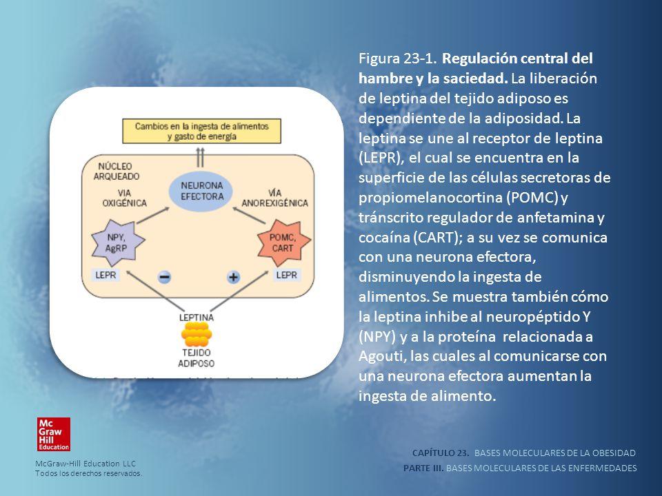 Figura 23-1. Regulación central del hambre y la saciedad