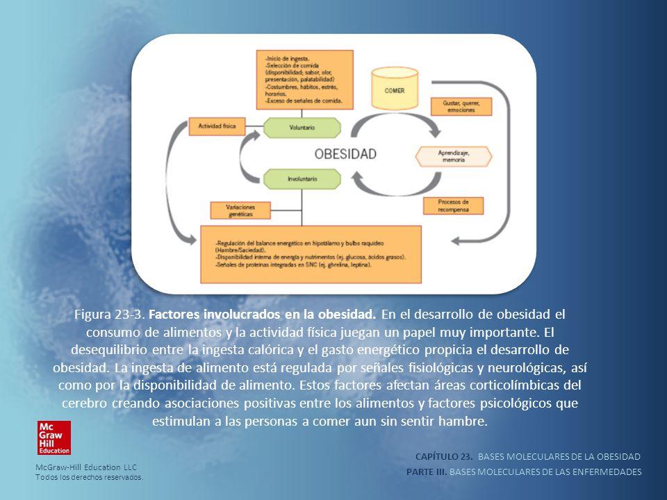 Figura 23-3. Factores involucrados en la obesidad