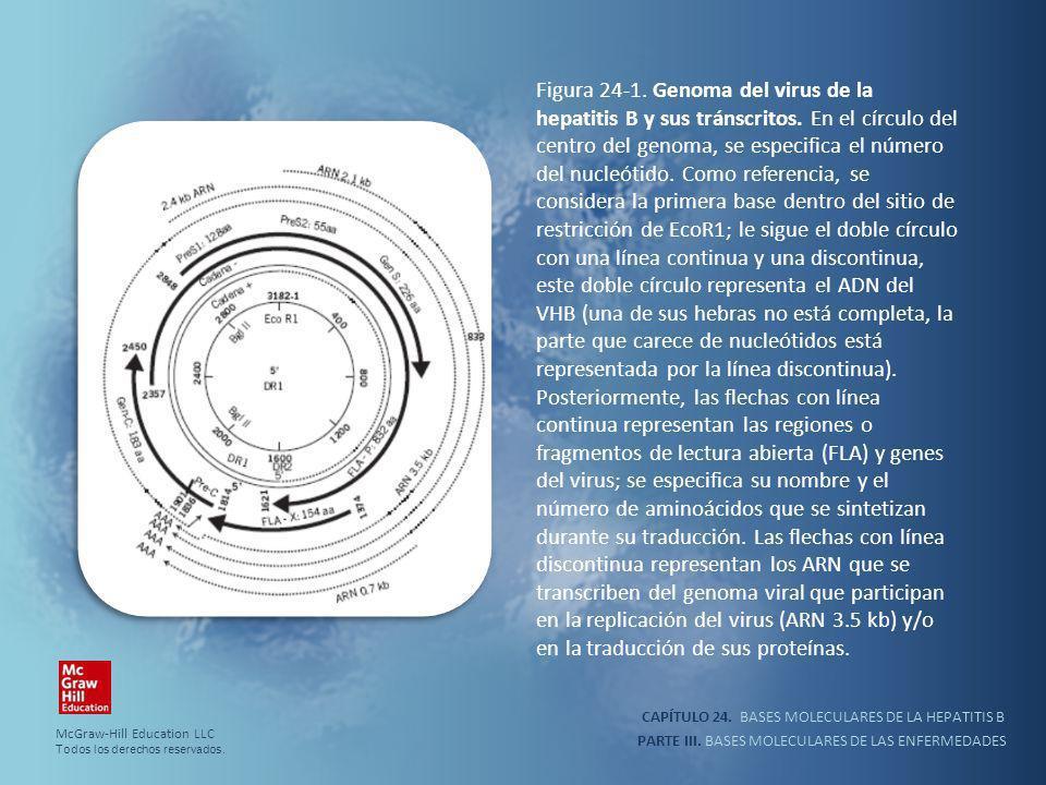 Figura 24-1. Genoma del virus de la hepatitis B y sus tránscritos