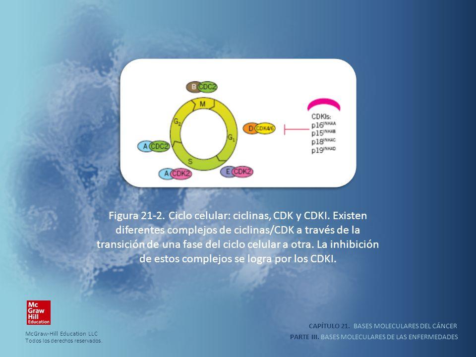 Figura 21-2. Ciclo celular: ciclinas, CDK y CDKI
