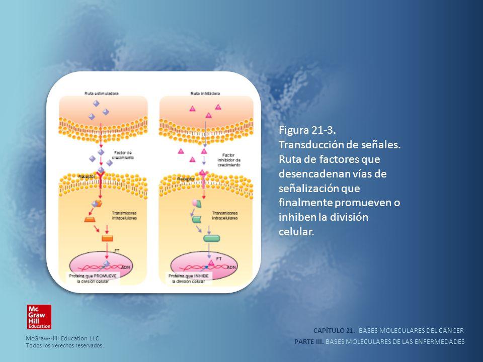 inhiben la división celular.