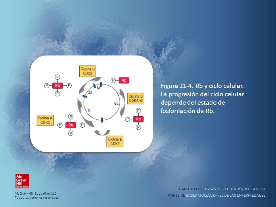 Figura 21-4. Rb y ciclo celular