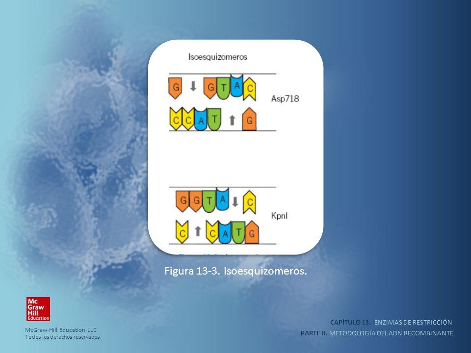 Figura 13-3. Isoesquizomeros.