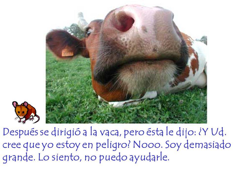 Después se dirigió a la vaca, pero ésta le dijo: ¿Y Ud