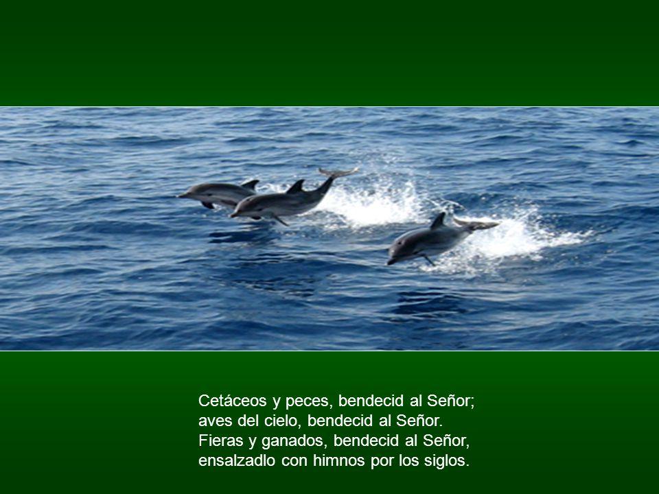 Cetáceos y peces, bendecid al Señor;