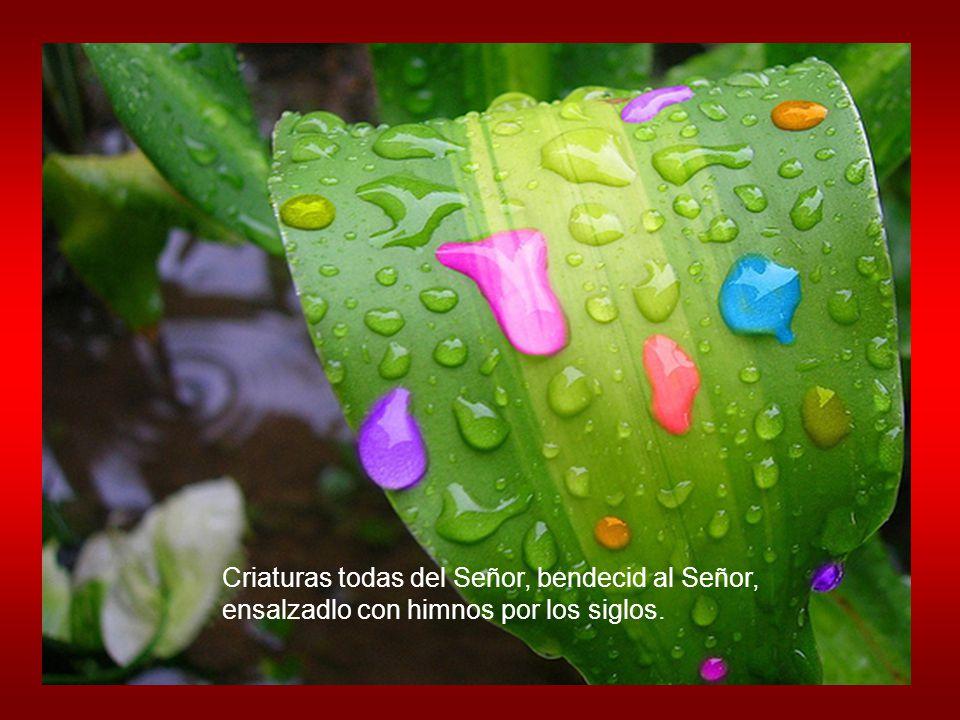 Criaturas todas del Señor, bendecid al Señor,