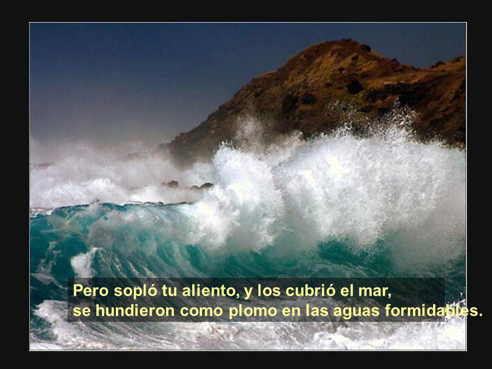 Pero sopló tu aliento, y los cubrió el mar,