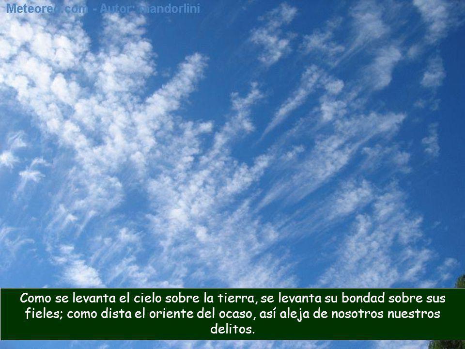 Como se levanta el cielo sobre la tierra, se levanta su bondad sobre sus fieles; como dista el oriente del ocaso, así aleja de nosotros nuestros delitos.