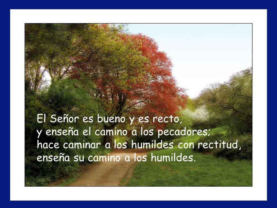 El Señor es bueno y es recto, y enseña el camino a los pecadores; hace caminar a los humildes con rectitud, enseña su camino a los humildes.