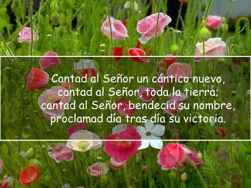 Cantad al Señor un cántico nuevo, cantad al Señor, toda la tierra;