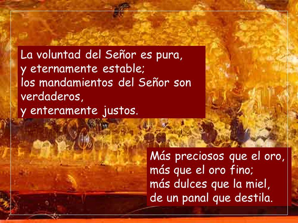 La voluntad del Señor es pura, y eternamente estable; los mandamientos del Señor son verdaderos, y enteramente justos.