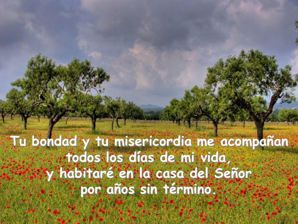 Tu bondad y tu misericordia me acompañan todos los días de mi vida, y habitaré en la casa del Señor por años sin término.