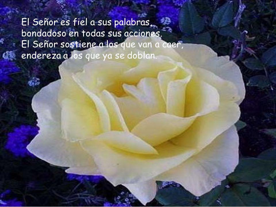 El Señor es fiel a sus palabras, bondadoso en todas sus acciones