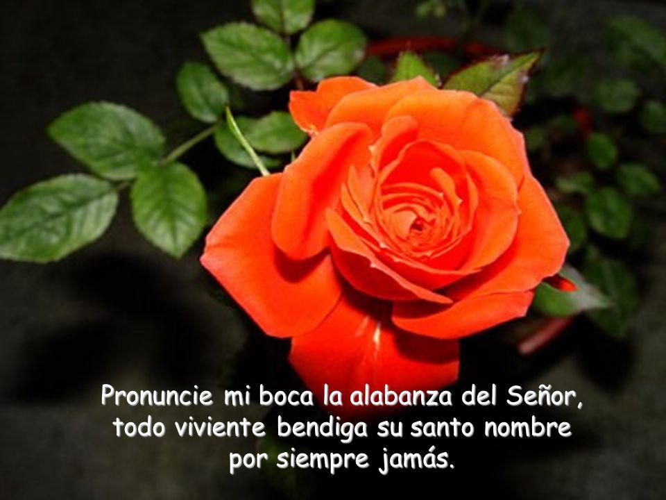 Pronuncie mi boca la alabanza del Señor, todo viviente bendiga su santo nombre por siempre jamás.