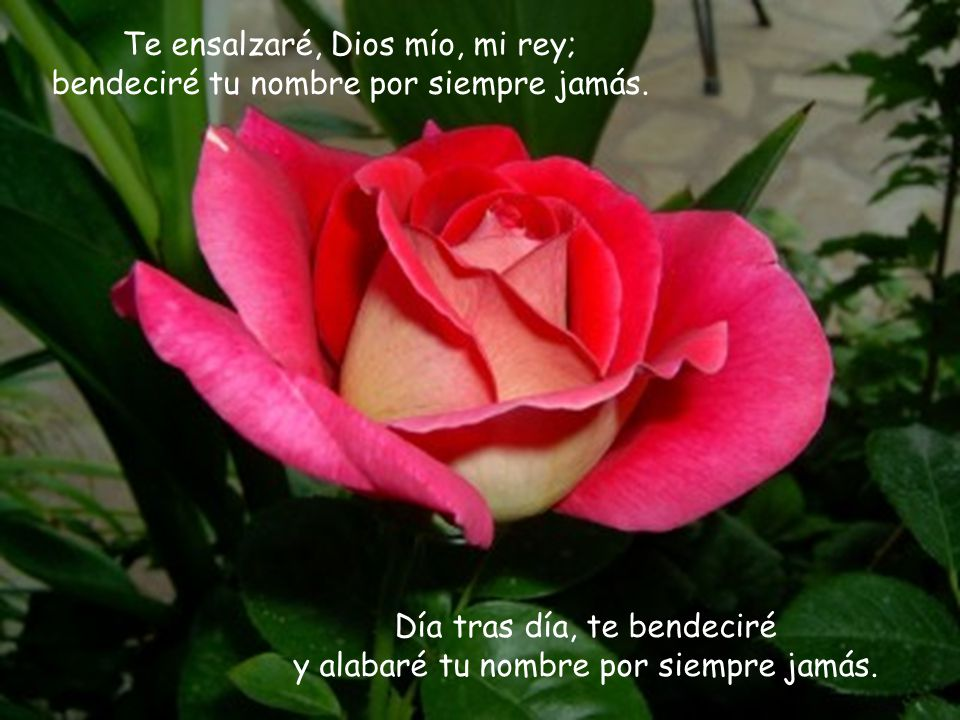 Te ensalzaré, Dios mío, mi rey; bendeciré tu nombre por siempre jamás.