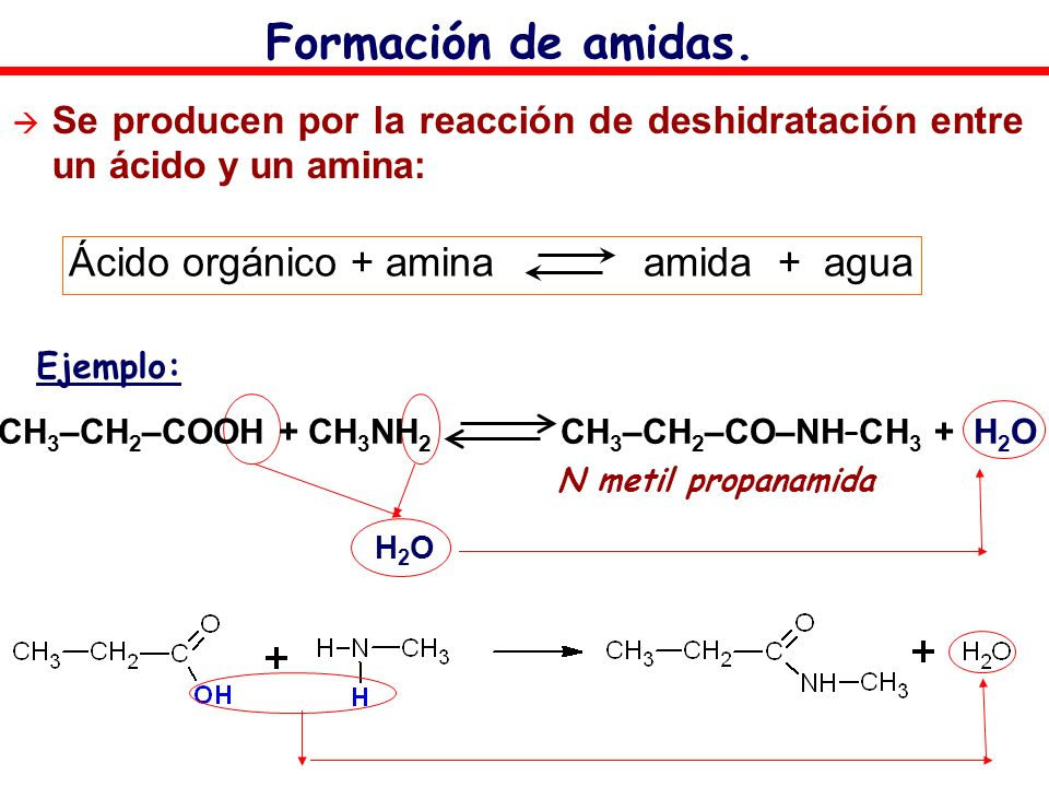 Ácido orgánico + amina amida + agua