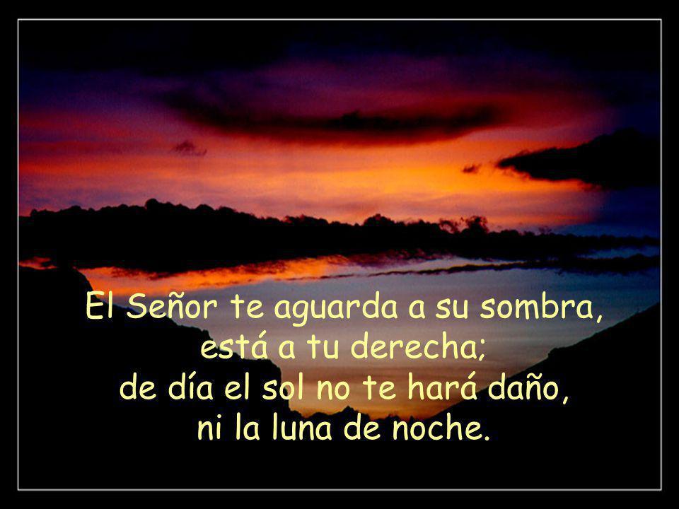 El Señor te aguarda a su sombra, está a tu derecha; de día el sol no te hará daño, ni la luna de noche.