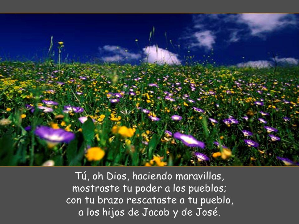 Tú, oh Dios, haciendo maravillas, mostraste tu poder a los pueblos;