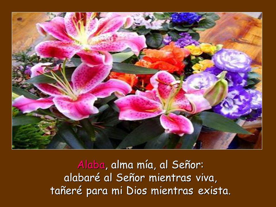 Alaba, alma mía, al Señor: alabaré al Señor mientras viva, tañeré para mi Dios mientras exista.