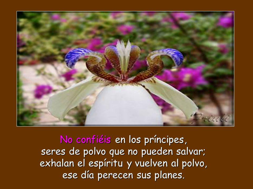 No confiéis en los príncipes, seres de polvo que no pueden salvar; exhalan el espíritu y vuelven al polvo, ese día perecen sus planes.