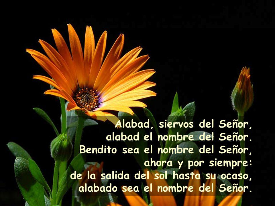 Alabad, siervos del Señor, alabad el nombre del Señor