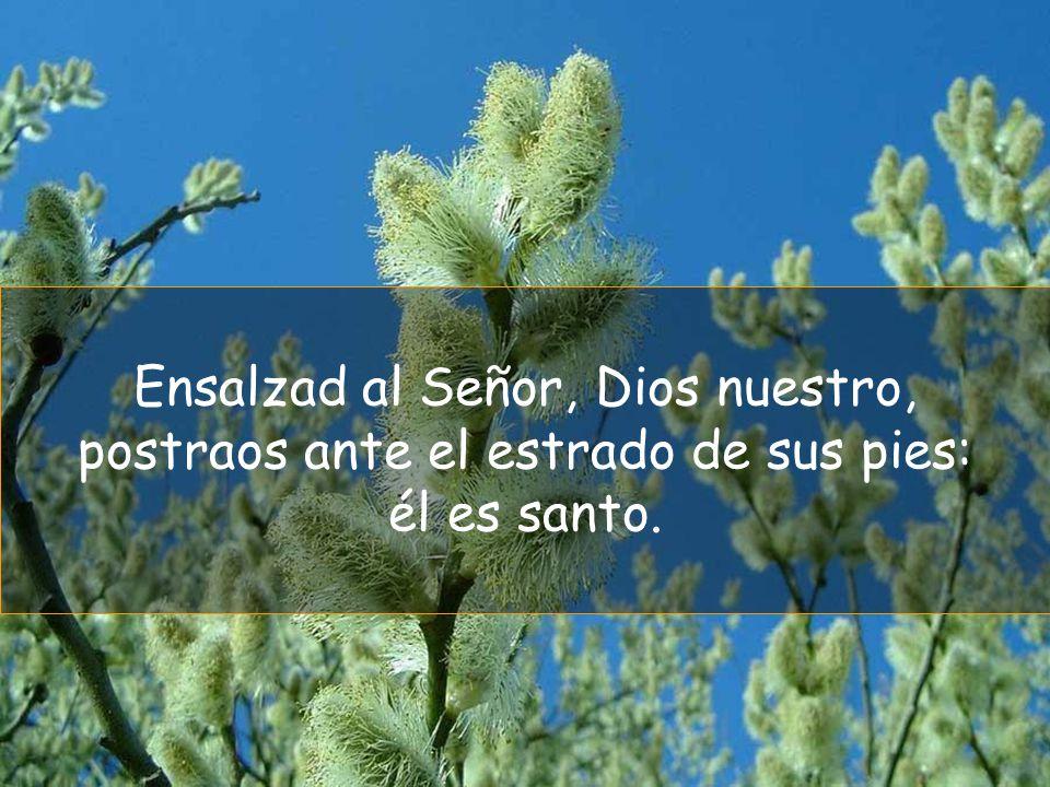 Ensalzad al Señor, Dios nuestro, postraos ante el estrado de sus pies: