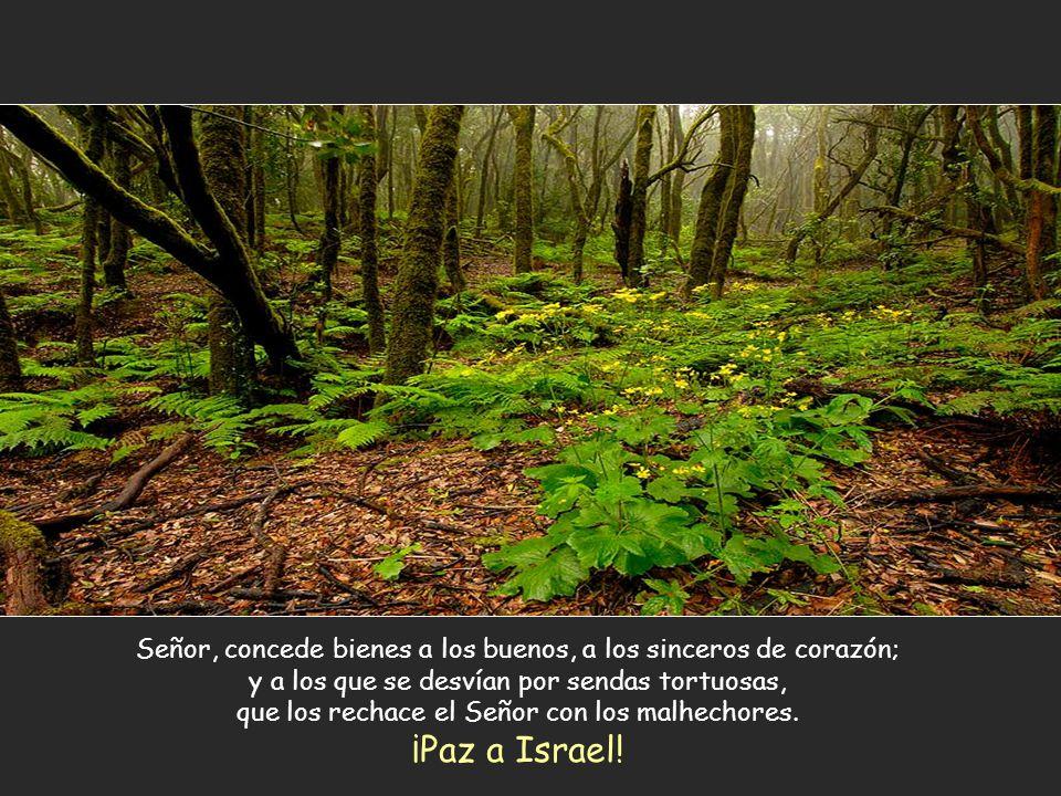 Señor, concede bienes a los buenos, a los sinceros de corazón; y a los que se desvían por sendas tortuosas, que los rechace el Señor con los malhechores.