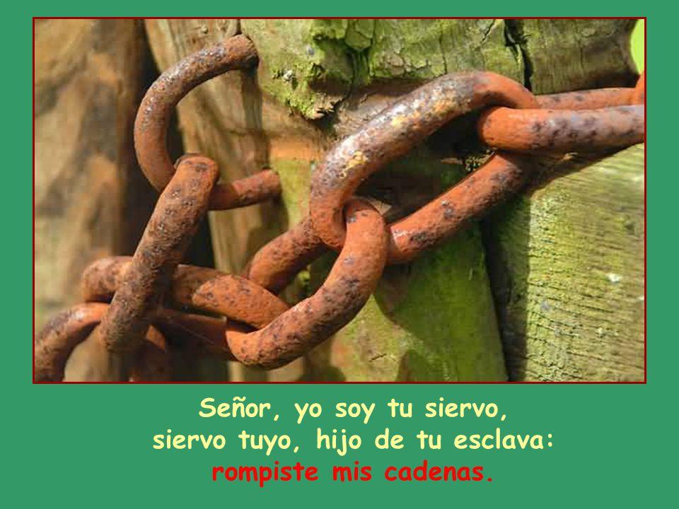 Señor, yo soy tu siervo, siervo tuyo, hijo de tu esclava: rompiste mis cadenas.