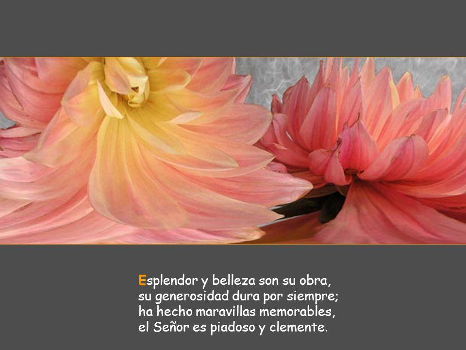 Esplendor y belleza son su obra, su generosidad dura por siempre; ha hecho maravillas memorables, el Señor es piadoso y clemente.
