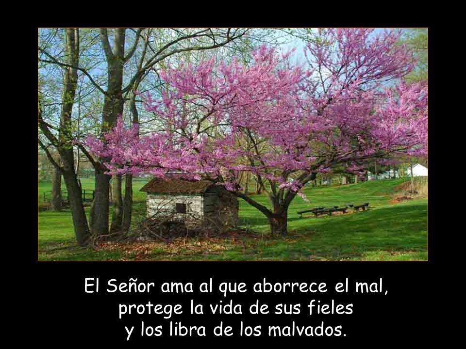 El Señor ama al que aborrece el mal, protege la vida de sus fieles